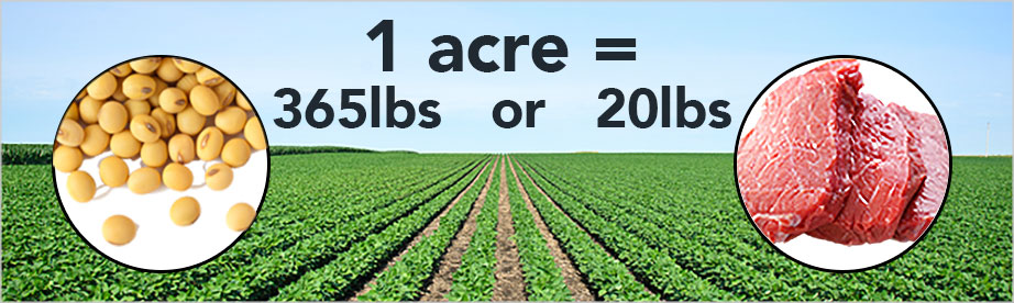 One acre of soy beans equals 365 lbs. of beans or 20 lbs. of meat.