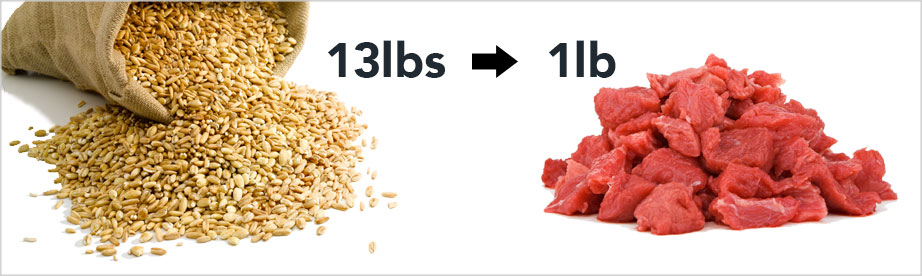 it takes 13 pound of grain to produce 1 pound of meat.
