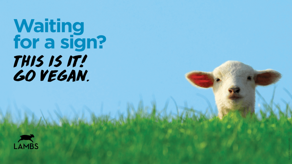"""PETA Zoom background with picture of lamb and text """"Waiting for a sign? THIS IS IT! GO VEGAN."""""""