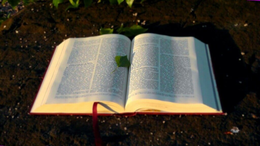 Bible with Green Leaf